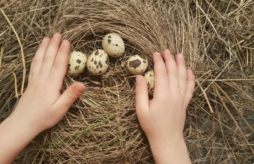 birds nest making