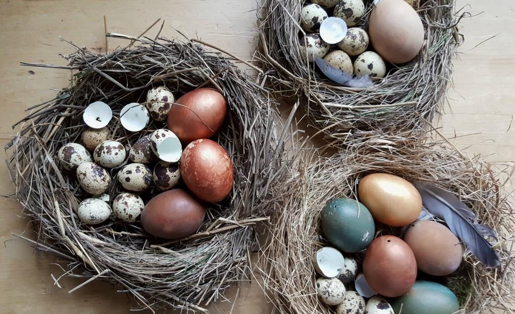 homemade birds nest